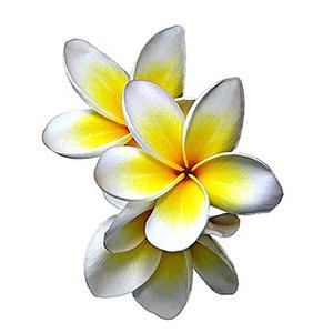 گل یاس تاهیتی